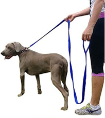 long leash on dog