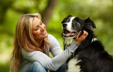 friends-dog