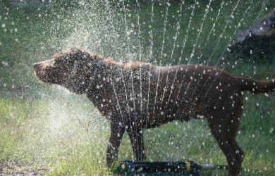water spring dog