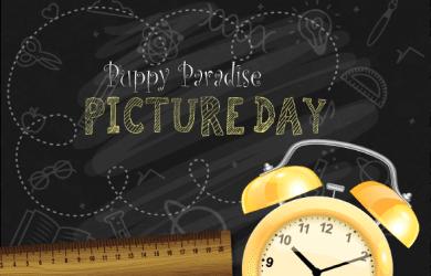 pptitlepicturedayweb